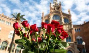 Les roses à offrir durant la Sant Jordi à Barcelone